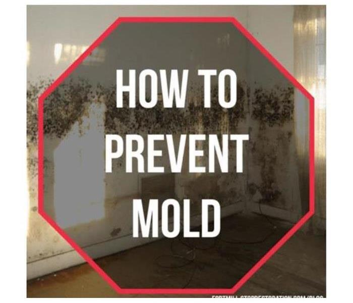 mold inside of a home